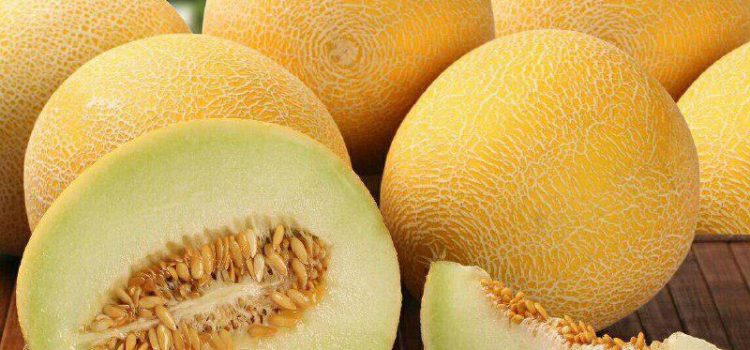 Uzbekistan exports 186.6 tonnes of melon in May
